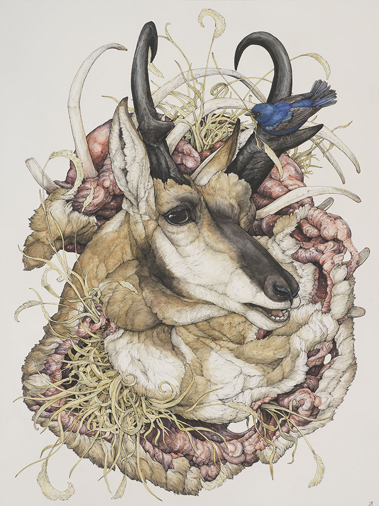 'Antilocapra americana' 2015, ballpoint pen, Ink pencils, acrylic ink, marker, colored pencil, graphite, and gel pen on hot-pressed watercolor paper, 18 ¼ x 24 inches